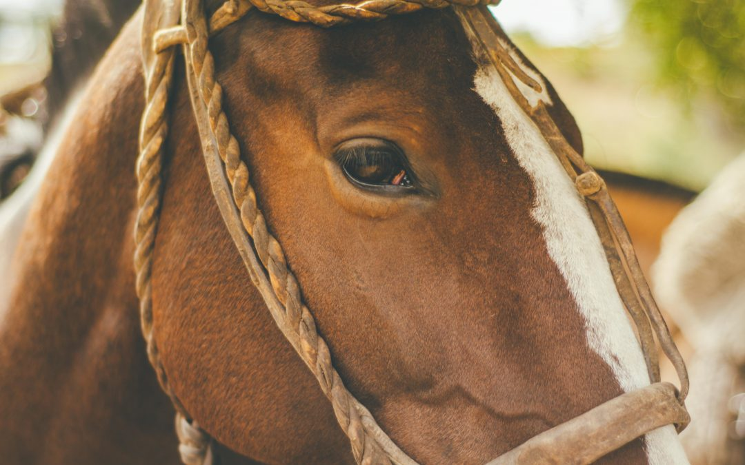 Curing Stage Fright: Lessons From Horse Whisperers